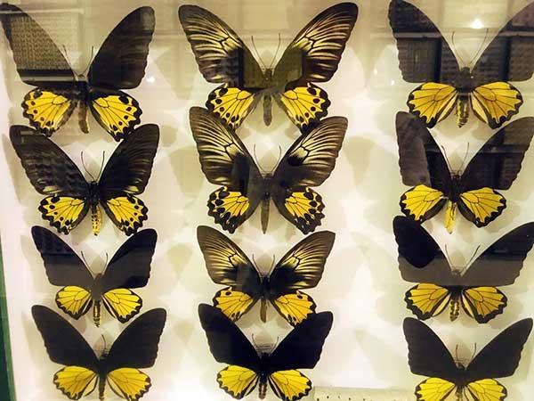 Το Εντομολογικό Μουσείο Βόλου είναι το μοναδικό στο είδος του στην Ελλάδα,